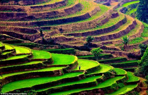 Visoke terase izvirajo iz kitajske.